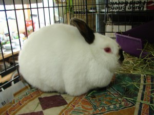 raise rabbits