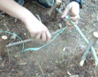 How To Make A Spring Snare Trap